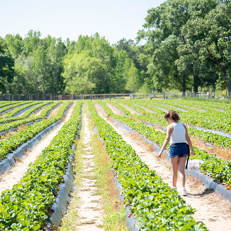 A spring guide to discovering Georgia Agriculture