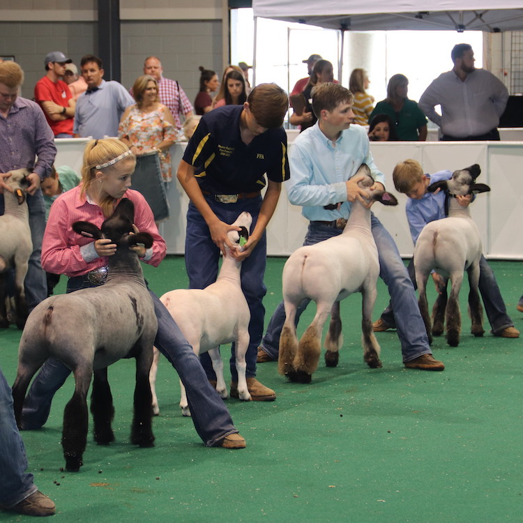 Jackson, Norton and Parker win state goat and lamb show