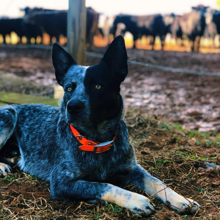Ga. dog makes Top 5 of national contest