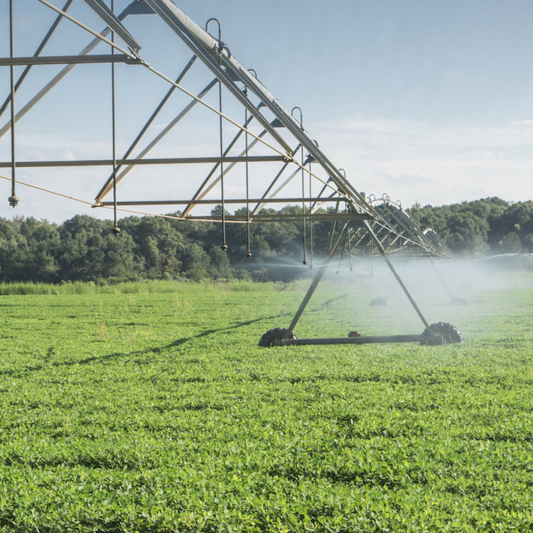 UGA teaching farmers to save water by scheduling irrigation
