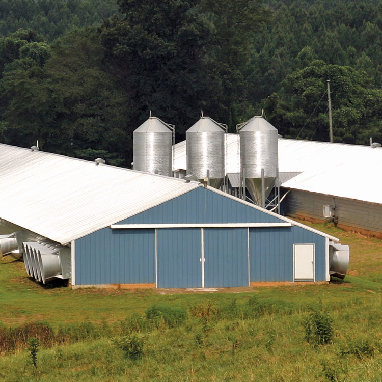 GFB poultry house guidelines based on UGA recommendations