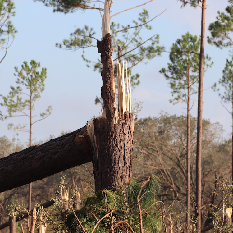 Updated forestry hurricane damage estimated at $762 million